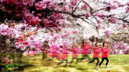 花見2_S.jpg