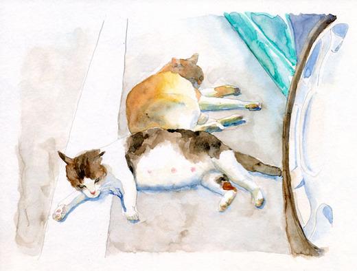 駐車場の猫2.jpg